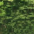 緑 GREEN