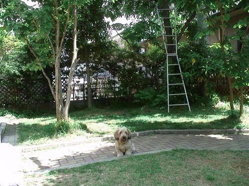 我が家の庭であります。