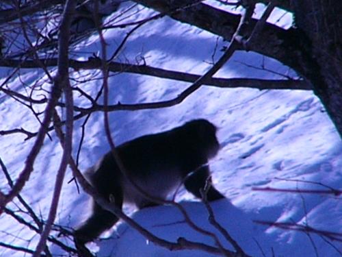 お猿の群れに遭遇
